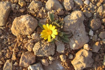 yellow-flower-1116621_1920